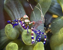 Crustacés et Céphalopodes